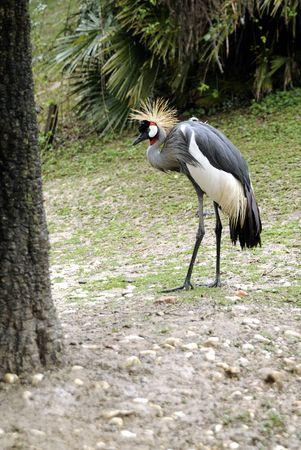 handsome bird