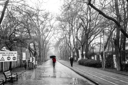 árbol del parque de lluvia de otoño Foto de archivo