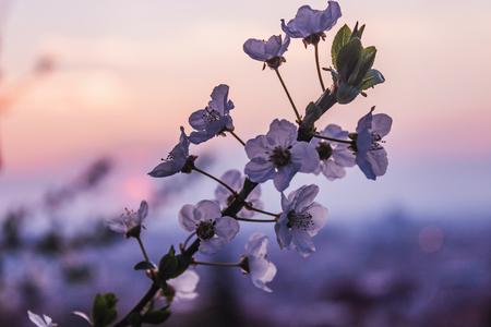 sunset city flower skyline