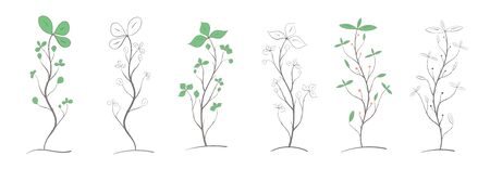 Set of branches with leaves and berries of various colors and shapes, two options, color and black and white on a white background