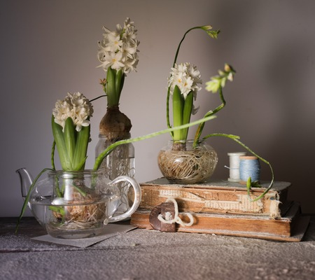 still life with three hyacinths in glass vases. old books, spools of thread