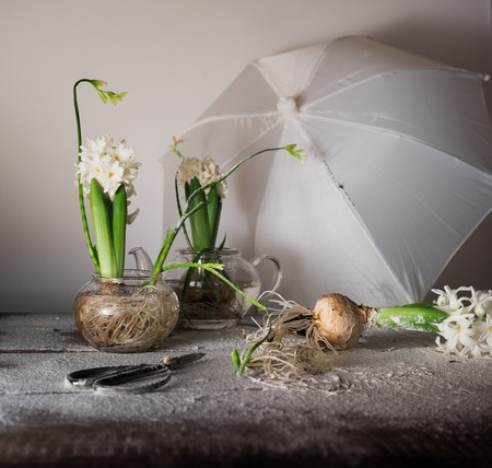 Still Life with an umbrella, hyacinths and freesias in glass vases.