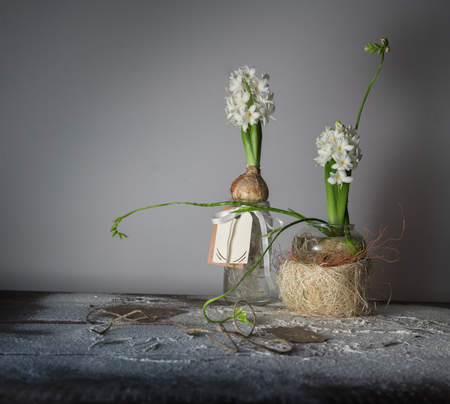 still life with hyacinths and freesias in glass vases. Stock Photo