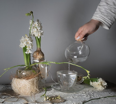 female hand pouring water from glass teapot into a cup. hyacinths and freesias in  vases.
