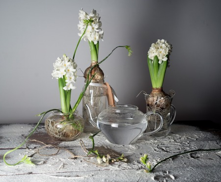 still life with three hyacinths and freesias in glass vases. Stock Photo
