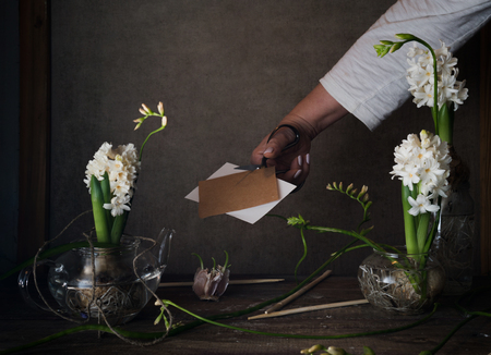 three white hyacinth in transparent vases, a female hand with scissors on  dark background Stockfoto
