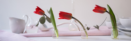 Header, banner for site design. Set of dishes for serving, Tulips, red. Horizontal format, space for text