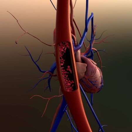 blood vessels on a heart background