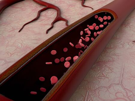 erythrocytes in blood vessels