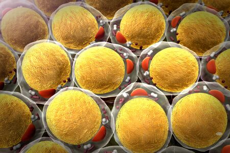 field of fat cells