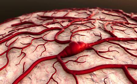 Modèle cérébral, surfase cérébrale, système circulatoire, maladie, capillaires Banque d'images