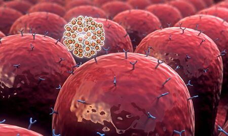 field of cells with receptors, leukocytes attack viruses