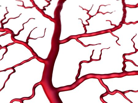 Capillary and cells, vein and Capillary