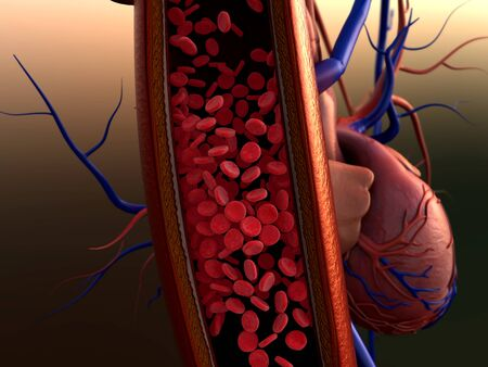 blood vessels, artery shown with a cut out section, Contraction of blood vessels on a heart background Zdjęcie Seryjne