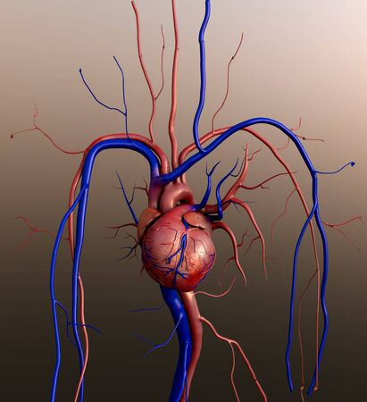 Human heart, Full clipping path included, Heart Anatomy, 4K animation of Human heart