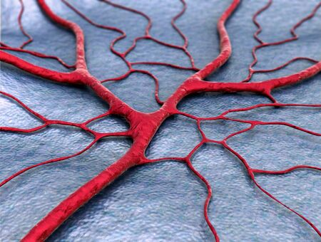 3D illustration of circulatory system, disease, of Capillary, blood vessel, blood loss Stock Photo