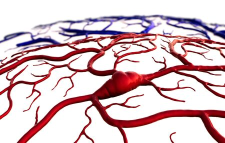 insult and brain, Brain Model, brain surfase, 3D illustration of circulatory system, disease, heart attack, Capillary