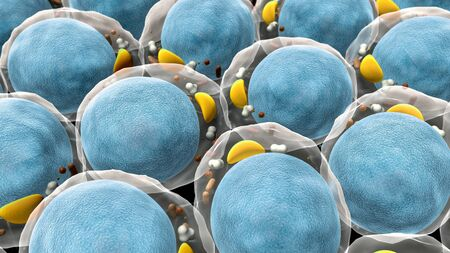 field of fat cells, High quality 3d render of fat cells, structure of the molecule, receptors on the cells surface Banque d'images - 132299487