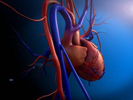 corazón humano, modelo de corazón, trazado de recorte completo incluido, corazón humano para estudio médico, anatomía del corazón humano, vista lateral del corazón