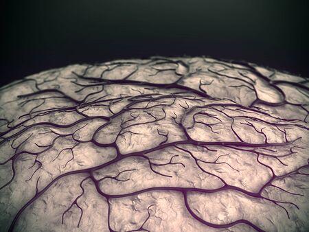 Brain Model, brain, brain surfase, circulatory system, disease, heart attack, Capillary Standard-Bild - 132959709