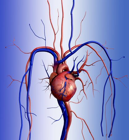 Human heart, Human Heart Anatomy, Artery, artery shown with a cut out section, High quality rendering with original textures and global illumination