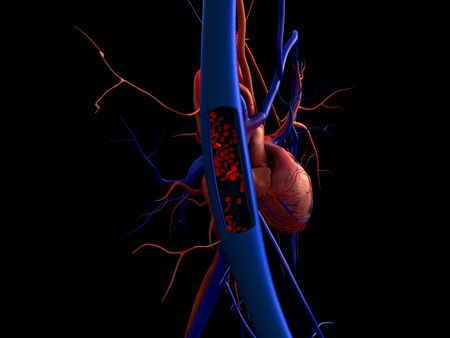 blood vessels, artery shown with a cut out section, High quality rendering with original textures and global illumination,