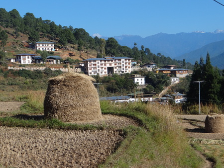 pileup: Piled up paddy harvest