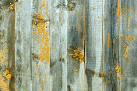 Wooden knotty background of gray color with bright yellow spots. 스톡 콘텐츠