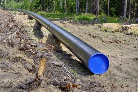 A single black pipeline pipe lies on the ground among the felled forest. Stok Fotoğraf