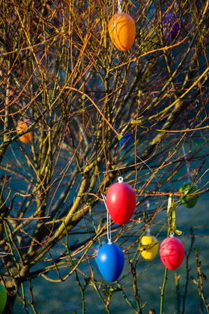 feast: Eggs hanging at a brush as a symbol of Easter Feast.