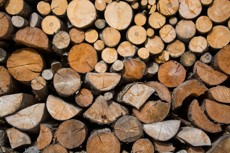 stapled: Fuelwood, stapled for drying and waiting for the winter time. Stock Photo