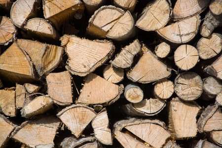 stapled: Fuelwood, stapled for drying and waiting for the wintertime.