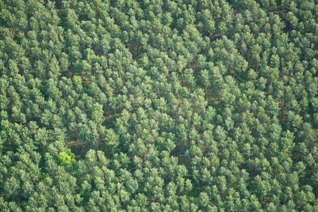 broadleaf: Aerial photo of a forest in Brandenburg county Germany middle of May.