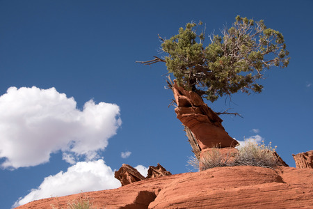 Edmaier Secret are fields of Socalled Brain Rocks They are located at Vermilion Cliffs Wilderness Utah USA.