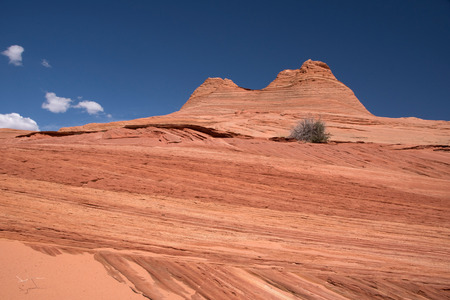 Edmaier Secret은 Socalled Brain Rocks의 필드입니다. 그들은 미국, Vermilion Cliffs Wilderness Utah에 있습니다.
