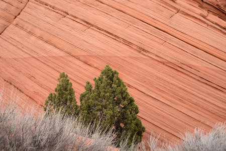 wild prairie: Coyote Buttes are mountains located Mainly in the Vermilion Cliffs National Monument in Utah.