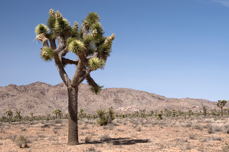 southeastern: Joshua Tree National Park is located in southeastern California USA.