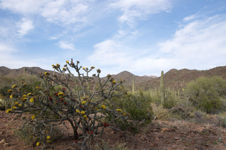 sonora: Saguaro National Park located in southern Arizona is part of the United States National Park System and of the Sonora Desert. Stock Photo