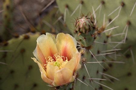 sonora: Cactus at Saguaro National Park Part of the United States National Park System and of the Sonora Desert.