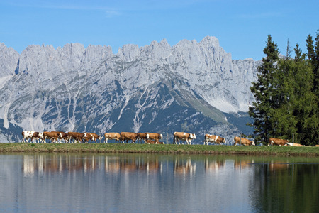 tyrol: Wilder Kaiser, photo taken from the Hartkaiser in Tyrol, Austria.