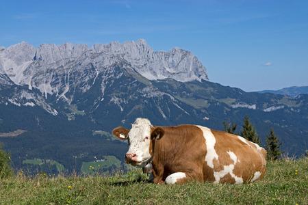 Wilder Kaiser, photo taken from the Hartkaiser in Tyrol, Austria.