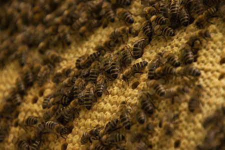 colony: Bee colony in a apiculture in Germany .