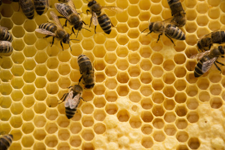 Bee colony in a apiculture in Germany .