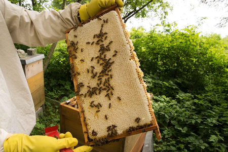 apiculture: beekeeper at a Bee colony in a apiculture in Germany.
