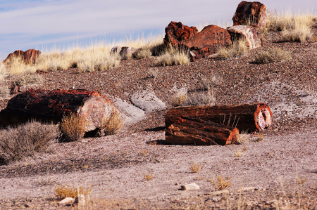 northeastern: Petrified Forest National Park is a United States national park in Navajo and Apache counties in northeastern Arizona.