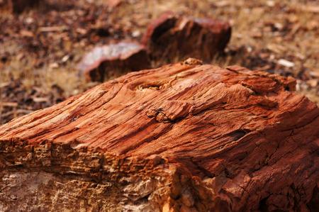 petrified: Petrified Forest