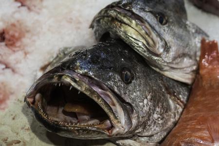 Frische Fische zum Verkauf in einer Markthalle.