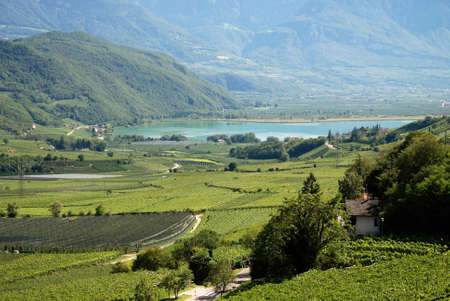 Lake Caldaro with vineyards at the South Tyrolean wine route - Italy.