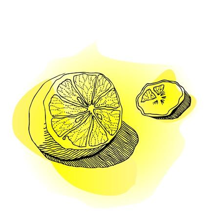 Watercolor lemon - illustration Vector