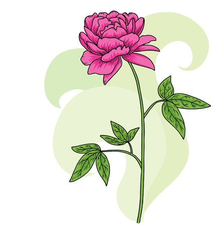 Floral pink peony card Background Vector